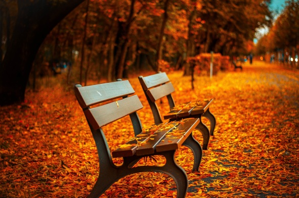 bench-fall-park-rest-40884