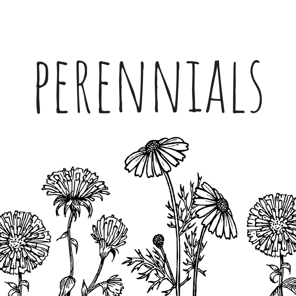Cup of Tea on Perennials Podcast